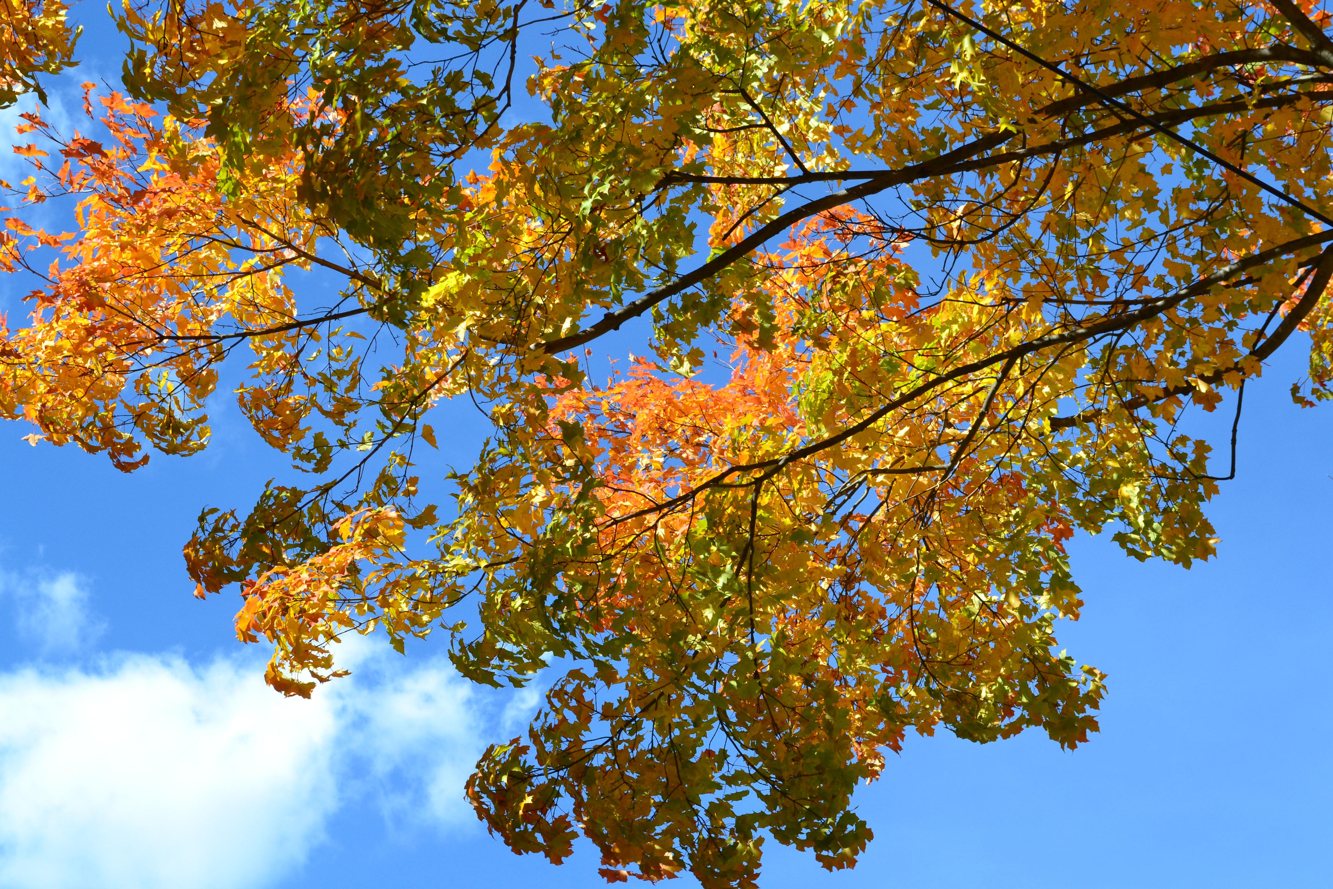 Fall foliage 2013 2