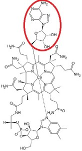 Adenosylcobalamin1